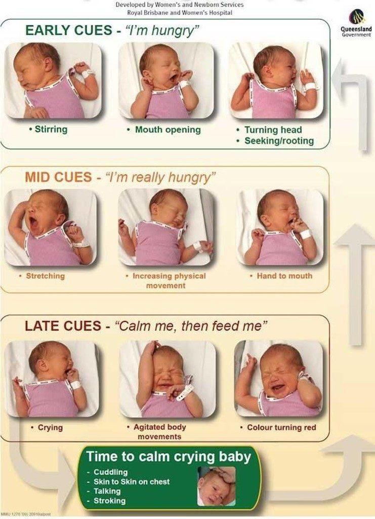 Borst Of Flesvoeding Voeden Op Verzoek Of Liever Volgens Een Schema